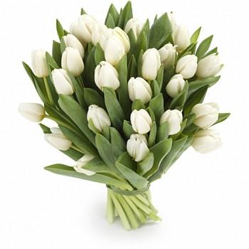 Белые тюльпаны купить цветы фуксии купить в минске